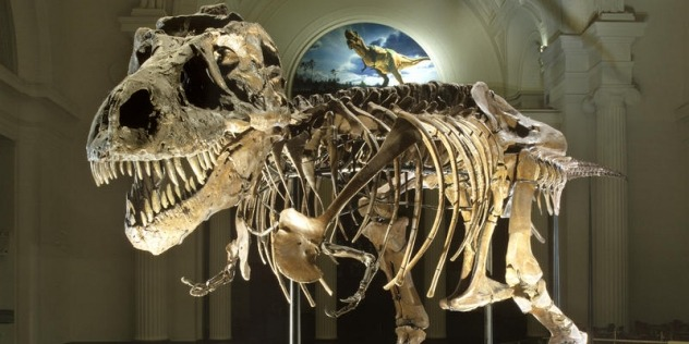 "The world-famous fossil known as ""Sue"" is the largest, best-preserved, and most complete Tyrannosaurus rex ever found, Chicago Field Museum"
